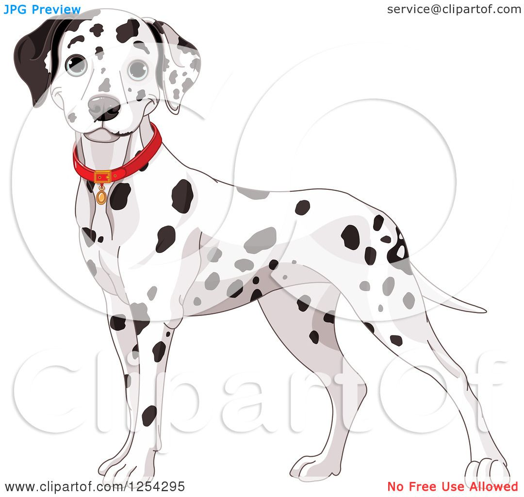 Clipart of a Cute Dalmatian Dog Wearing a Red Collar - Royalty Free ...