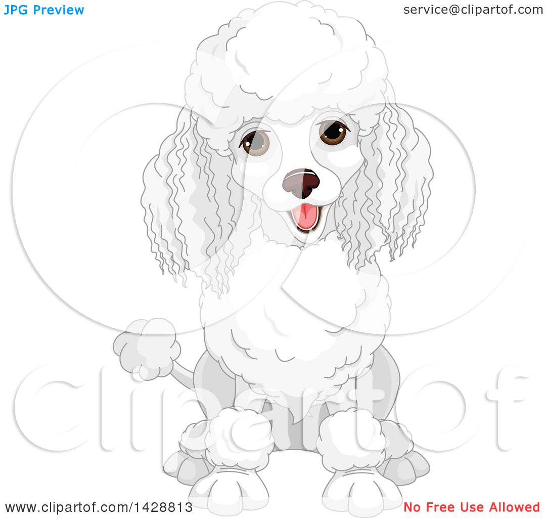 Download Poodle Chubby Adorable Dog - Clipart-Of-A-Cute-Happy-White-Poodle-Dog-Sitting-Royalty-Free-Vector-Illustration-10241428813  Photograph_391456  .jpg