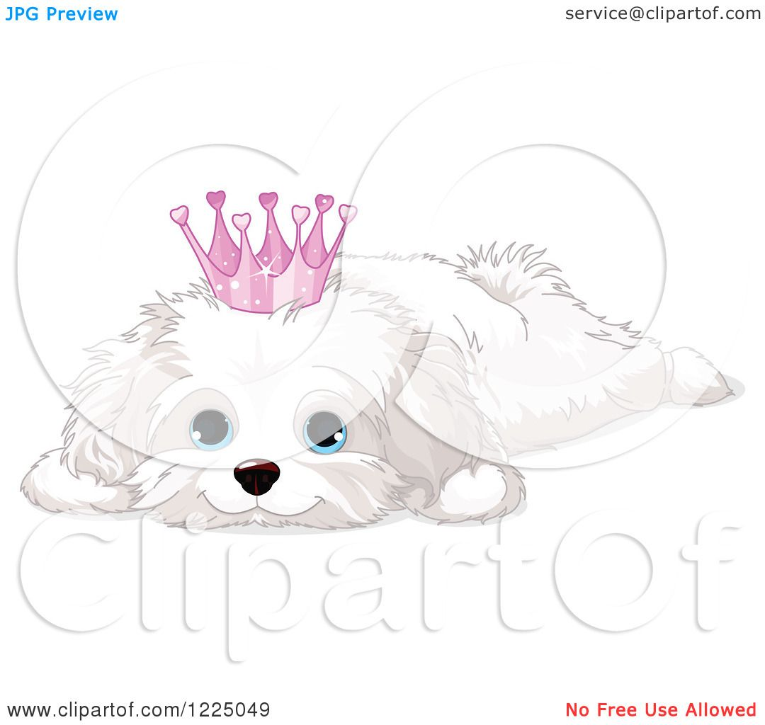 Clipart of a Cute Spoiled Bichon Frise or Maltese Puppy Dog ...