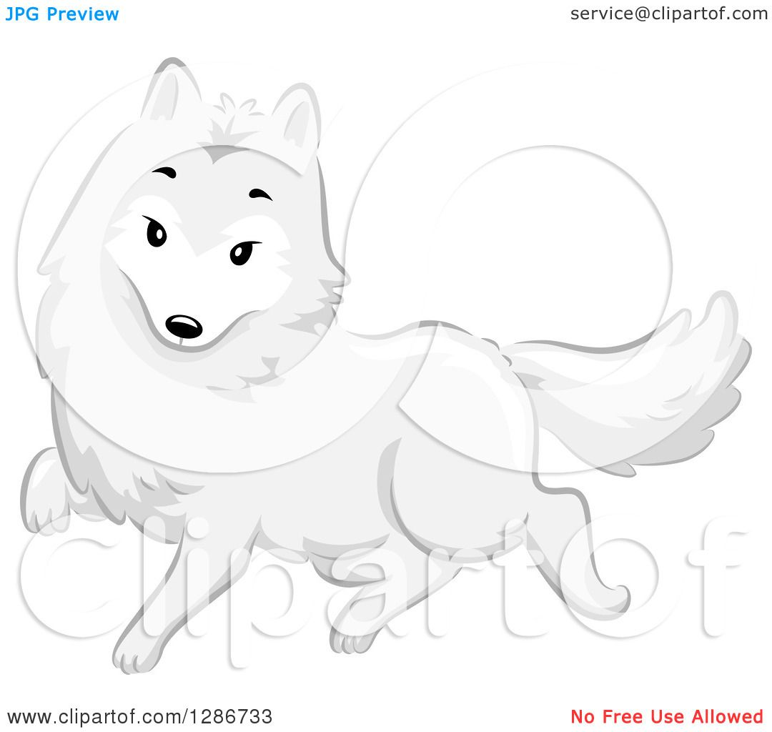 clipart of a cute white arctic fox walking royalty free vector