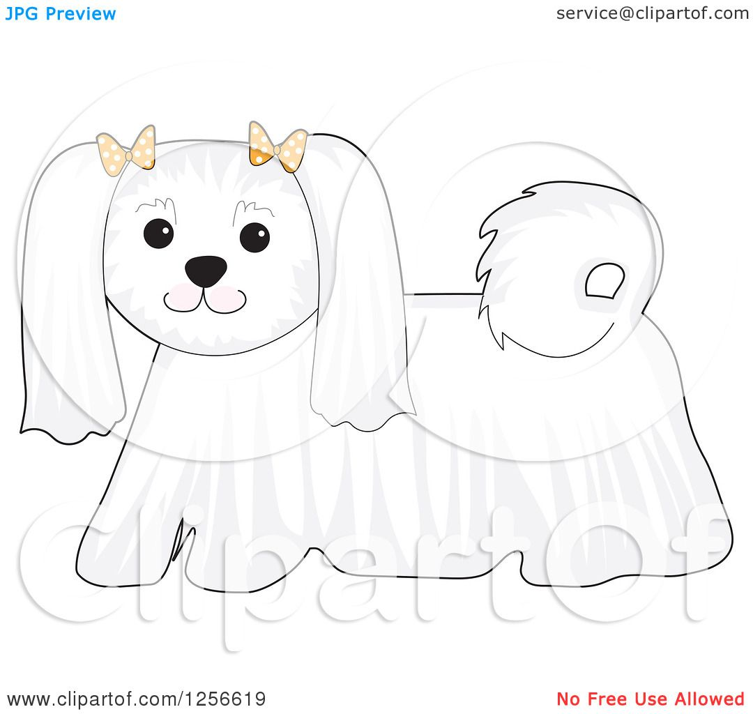 maltese dog clipart - photo #44
