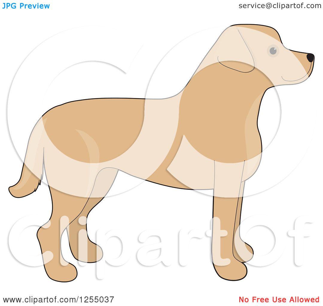 clipart of a cute yellow labrador retriever dog in profile