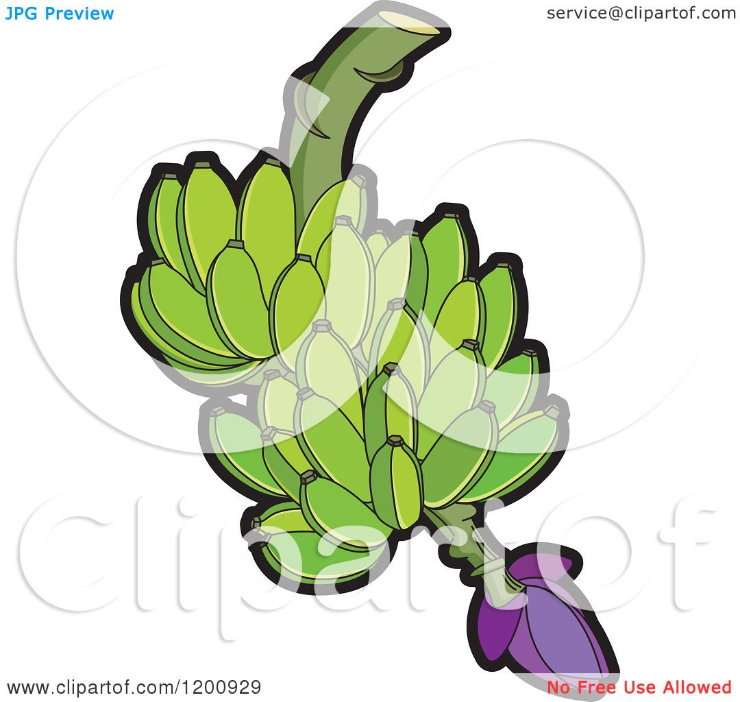 Clipart Of A Fresh Bunch Of Green Bananas Royalty Free