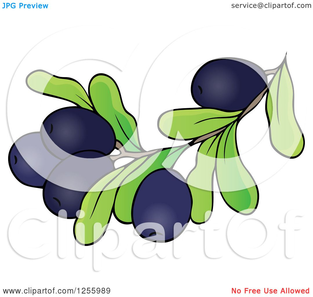 Clipart of a Greek Olive Branch - Royalty Free Vector Illustration ...