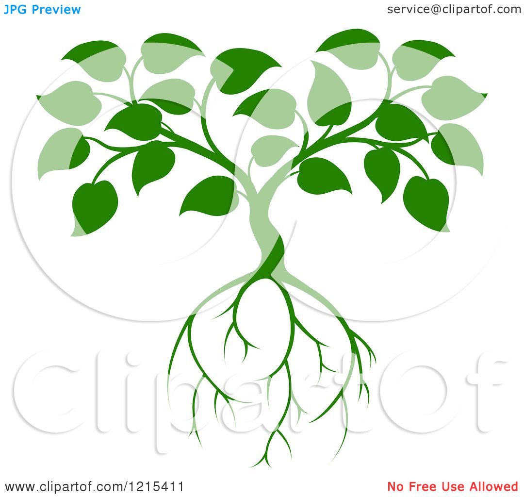 Clipart of a Green Seedling Tree with Leaves and Roots 2 ...
