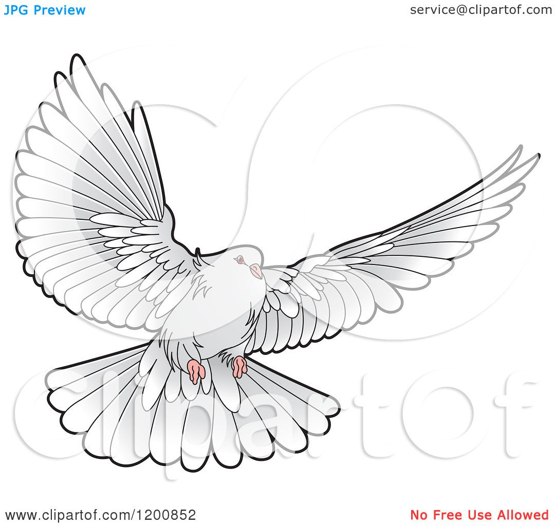 flying dove pencil drawing - photo #20