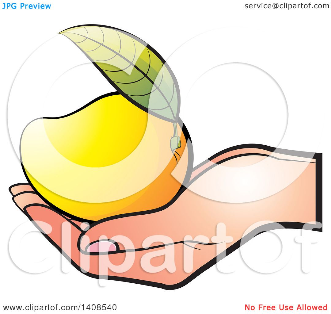 Clipart of a Hand Holding a Ripe Mango - Royalty Free ...