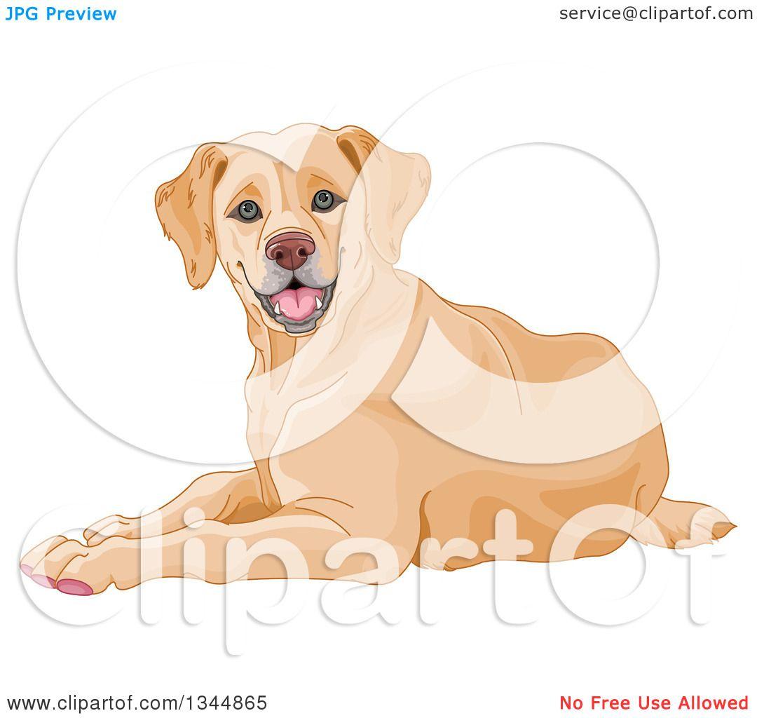 Clipart of a Happy Yellow Labrador Retriever Dog Resting - Royalty ...