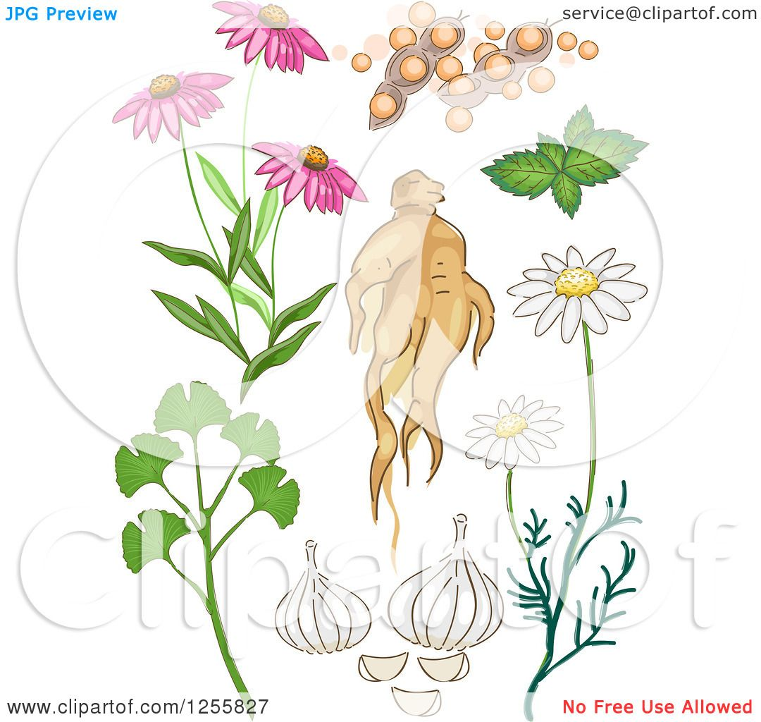 Clipart of a herbal plants royalty free vector - Clipart illustration ...