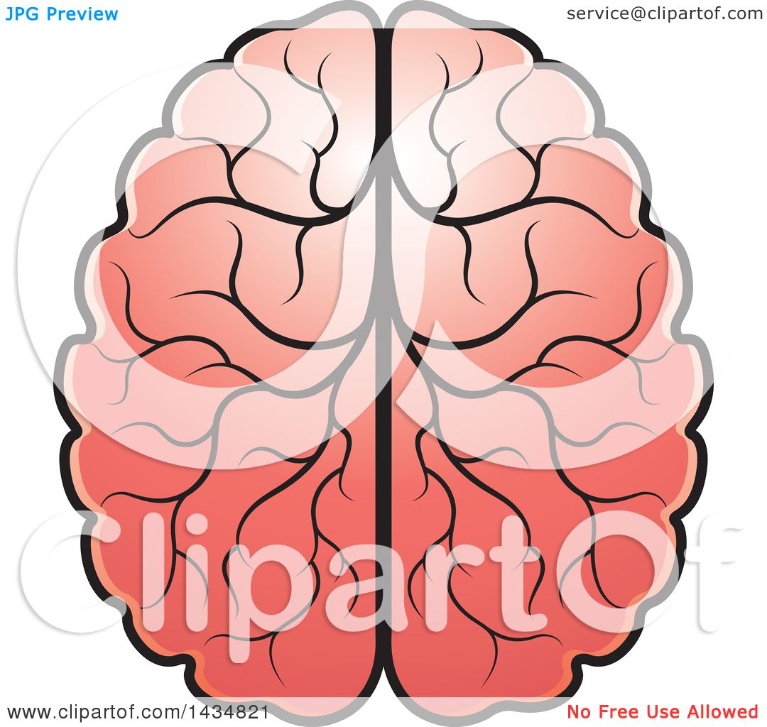 Clipart of a Human Brain - Royalty Free Vector ... (1080 x 1024 Pixel)