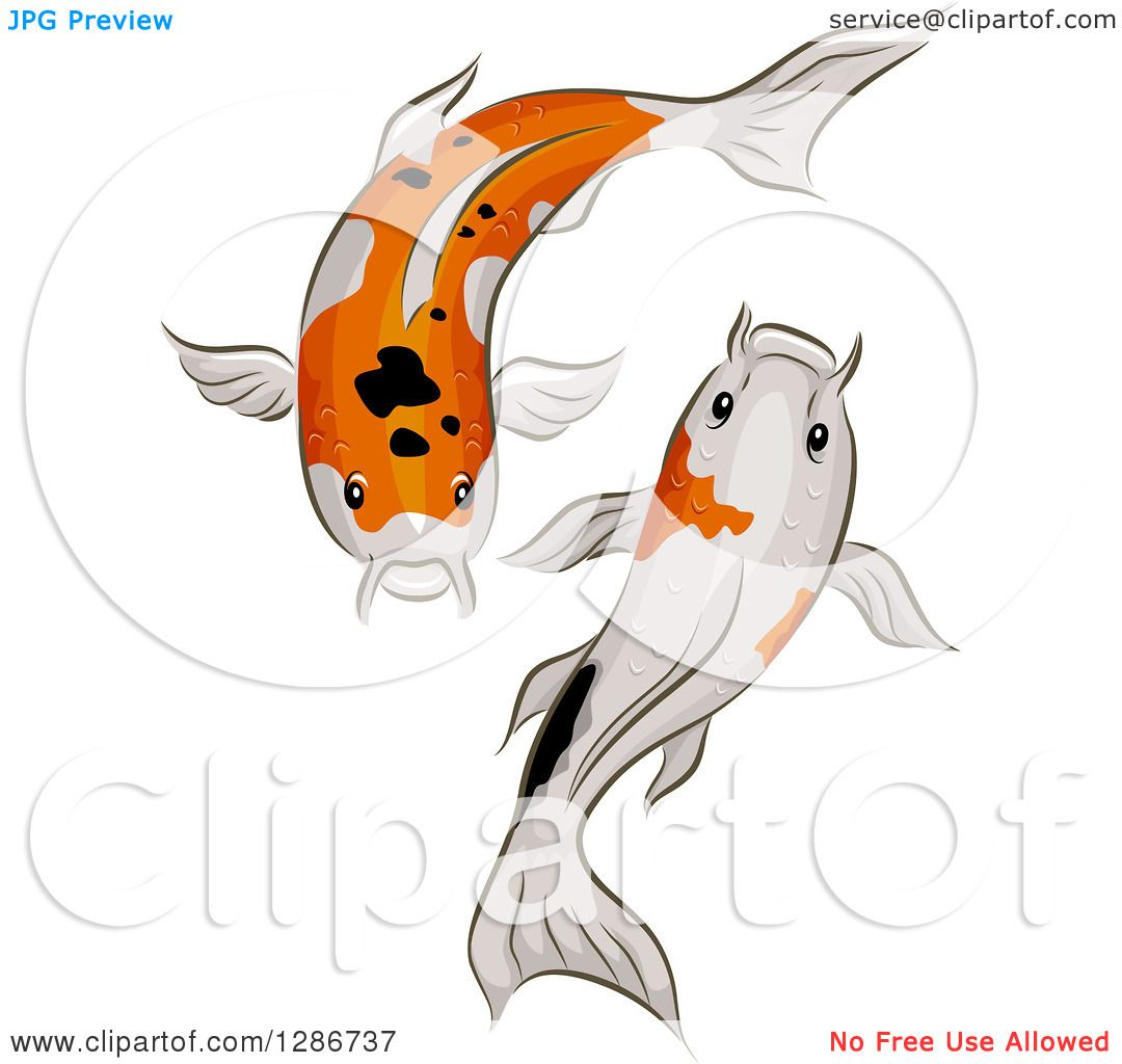 Clipart Of A Pair Of Calico Koi Fish Swimming Royalty