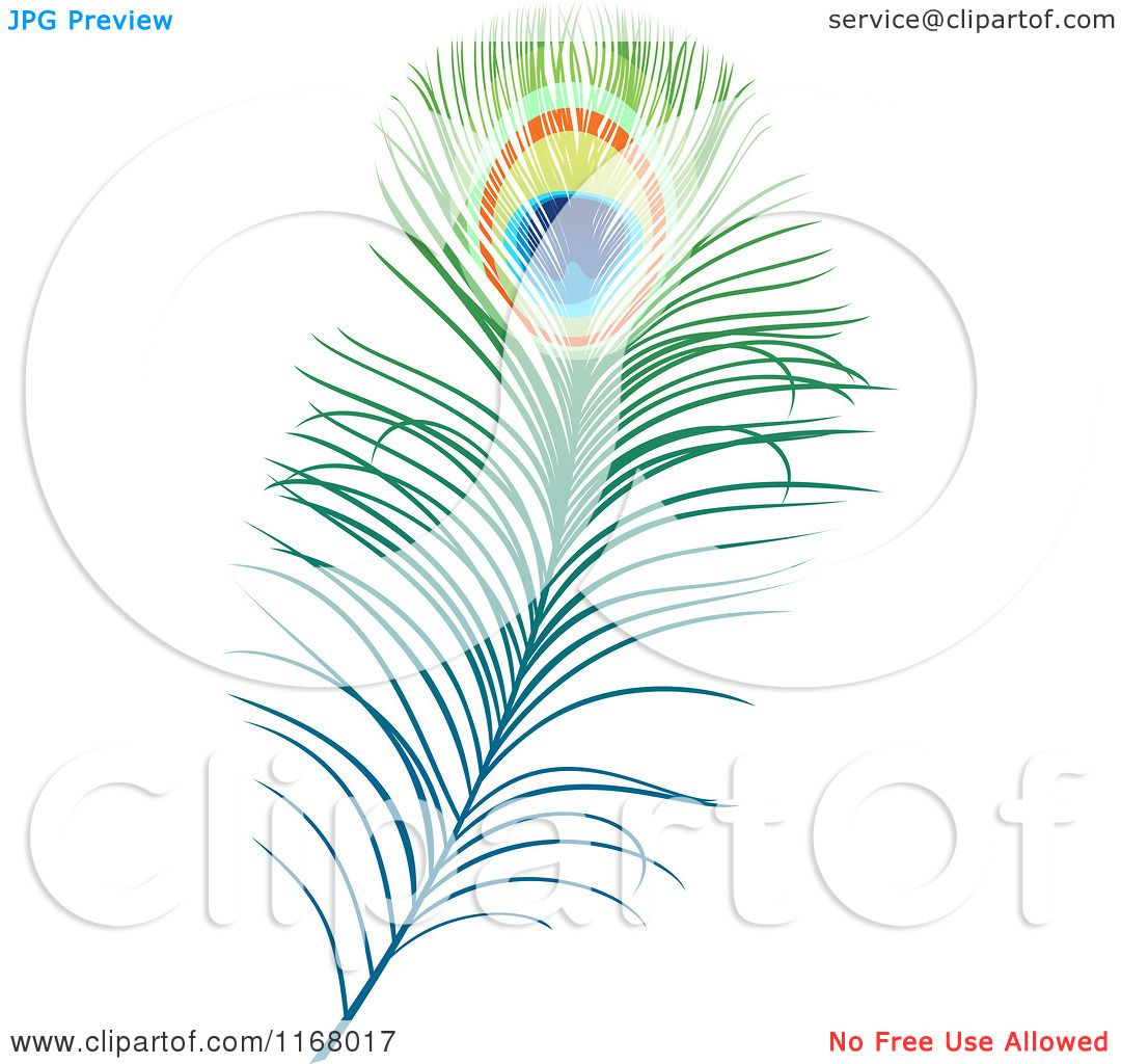 Clipart Of A Peacock Feather Royalty Free Vector