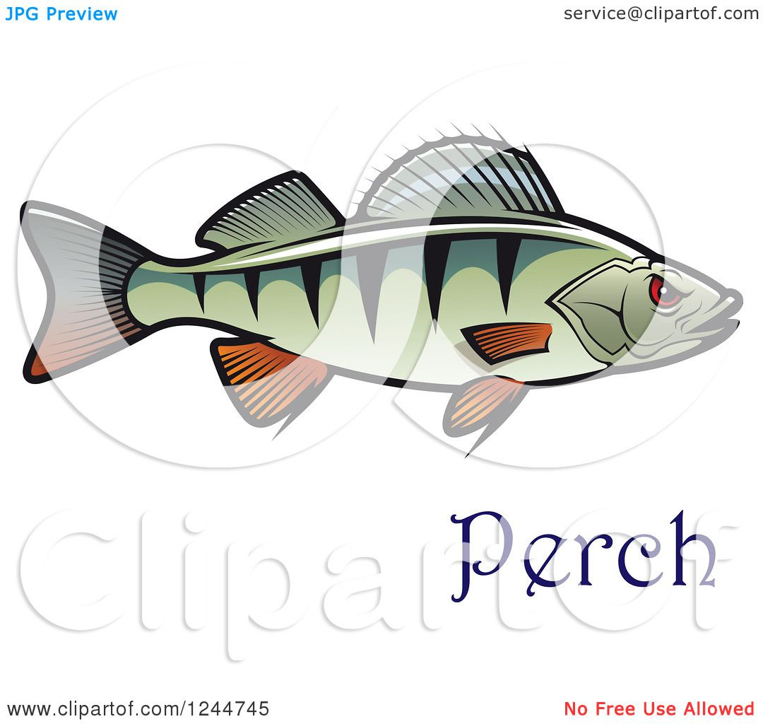 Clipart of a Perch Fish with Text - Royalty Free Vector ...