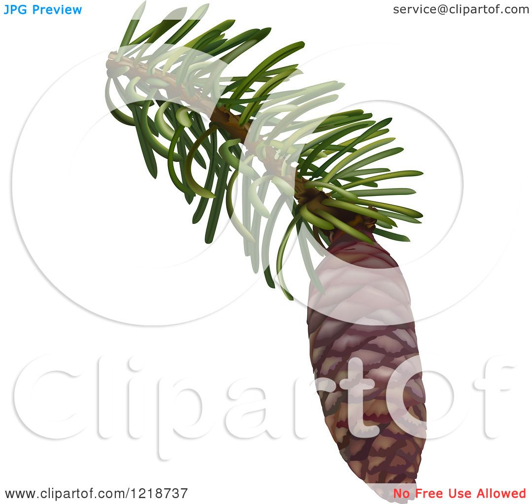 Clipart Of A Pine Cone On A Branch Royalty Free Vector