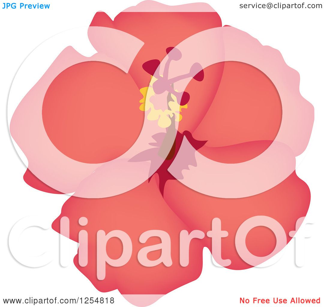 Clipart Of A Pink Hibiscus Flower Royalty Free Vector Illustration