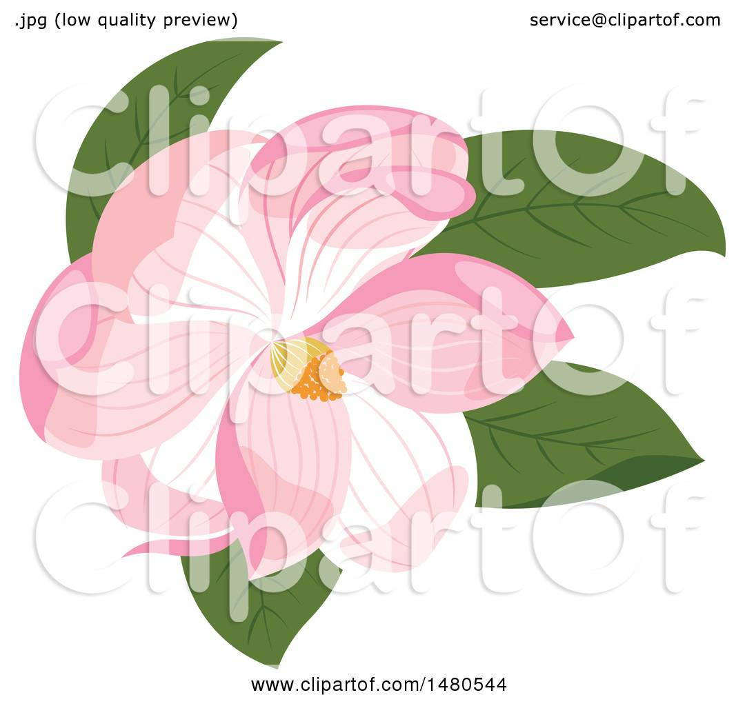 Clipart Of A Pink Magnolia Flower Royalty Free Vector Illustration