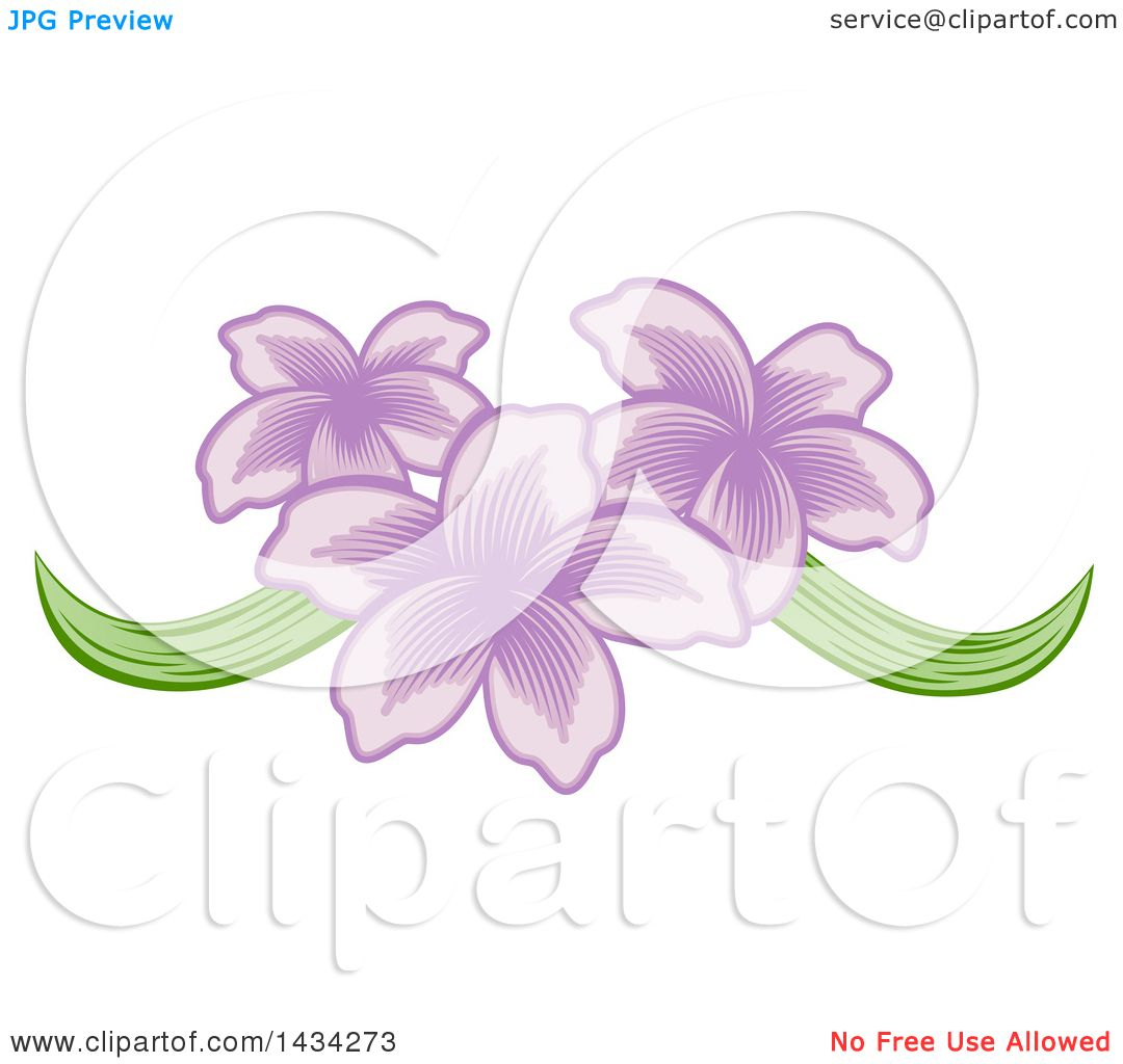 Clipart of a Pretty Purple Orchid Flower Design - Royalty ...
