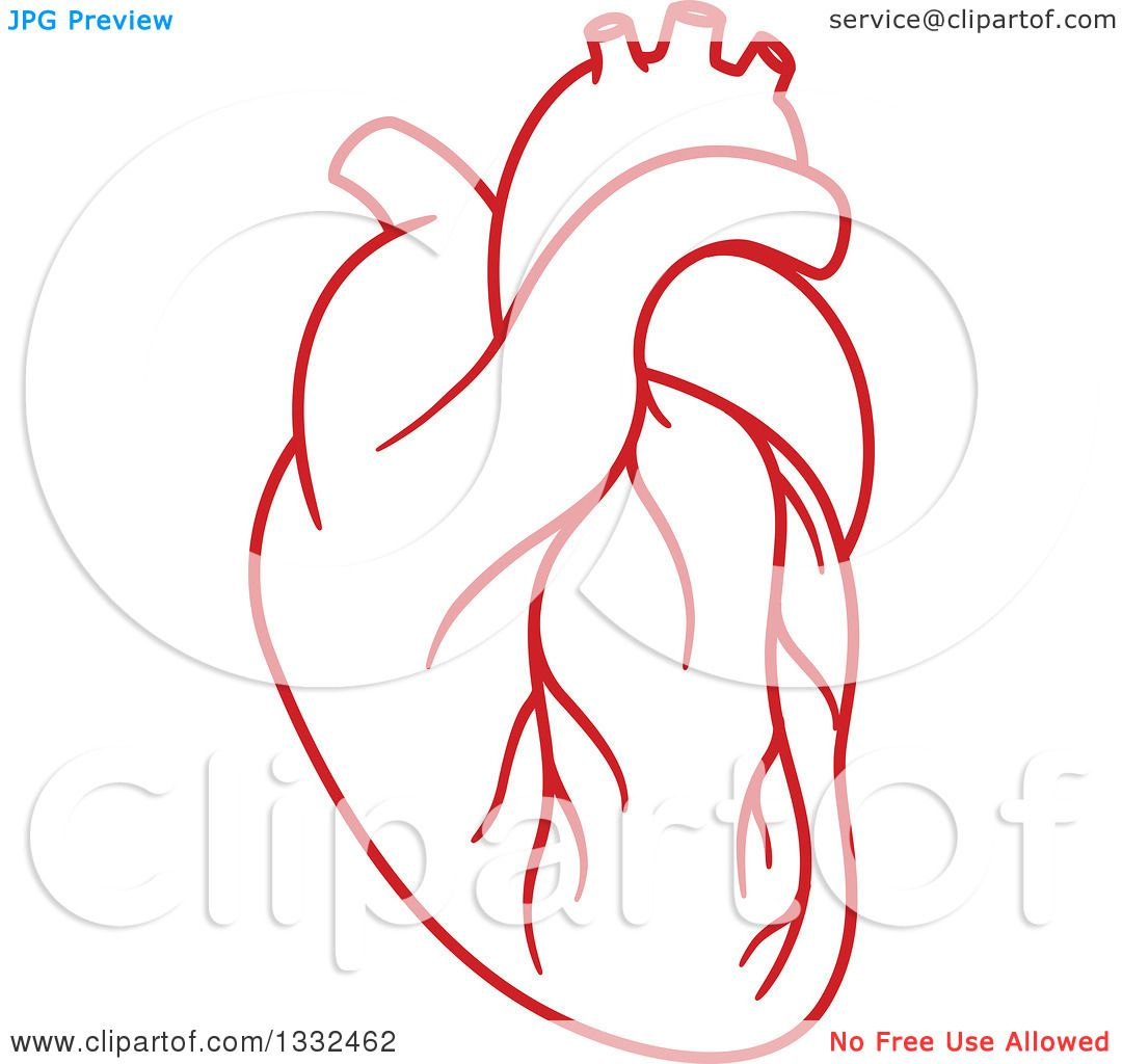 clipart of a human heart - photo #17