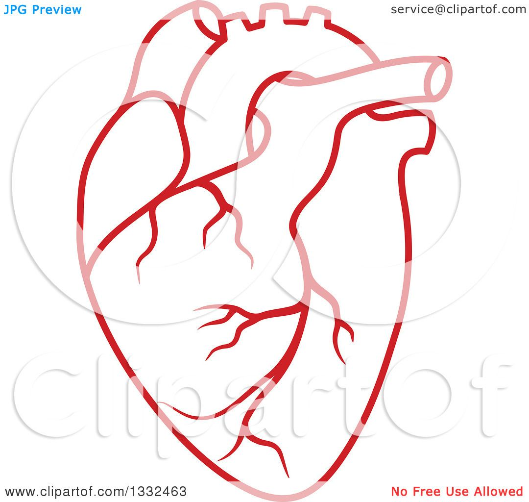 Clipart Of A Red Human Heart 3 Royalty Free Vector