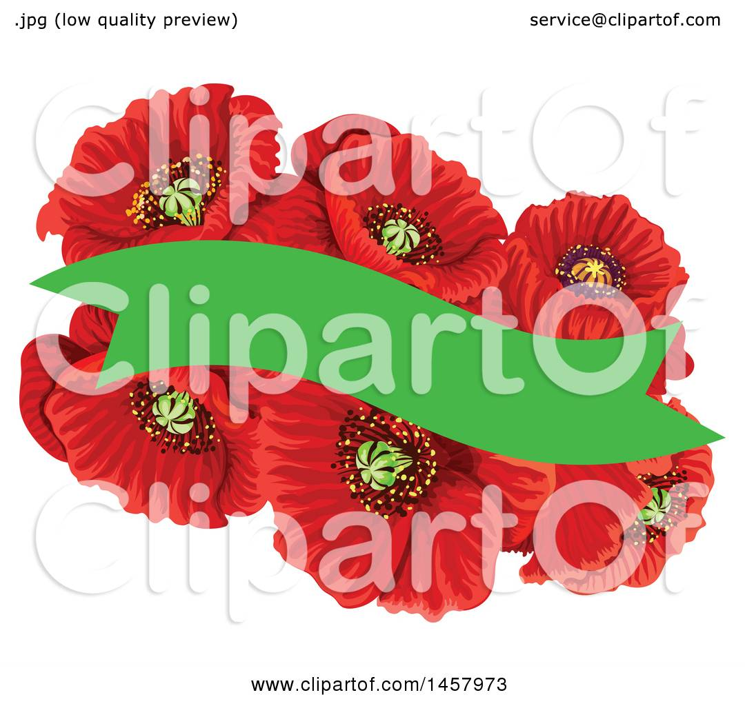 Clipart Of A Red Poppy Flower And Green Banner Design Element