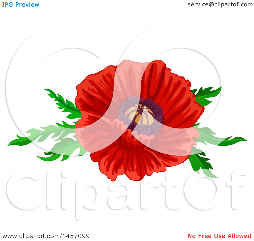 Clipart of a red poppy flower and leaves design royalty free clipart of a red poppy flower and leaves design royalty free vector illustration by vector tradition sm mightylinksfo Choice Image