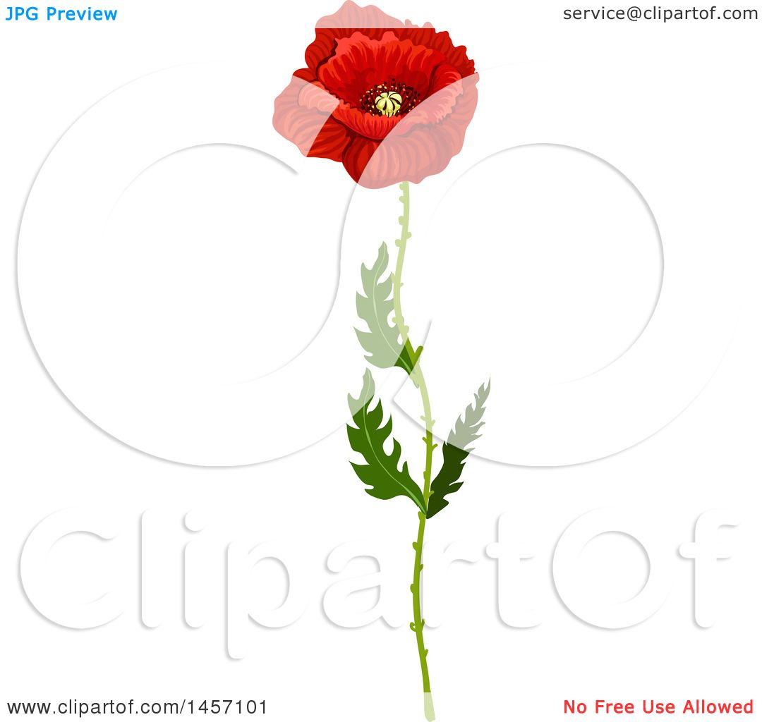Clipart Of A Red Poppy Flower And Stem Royalty Free Vector