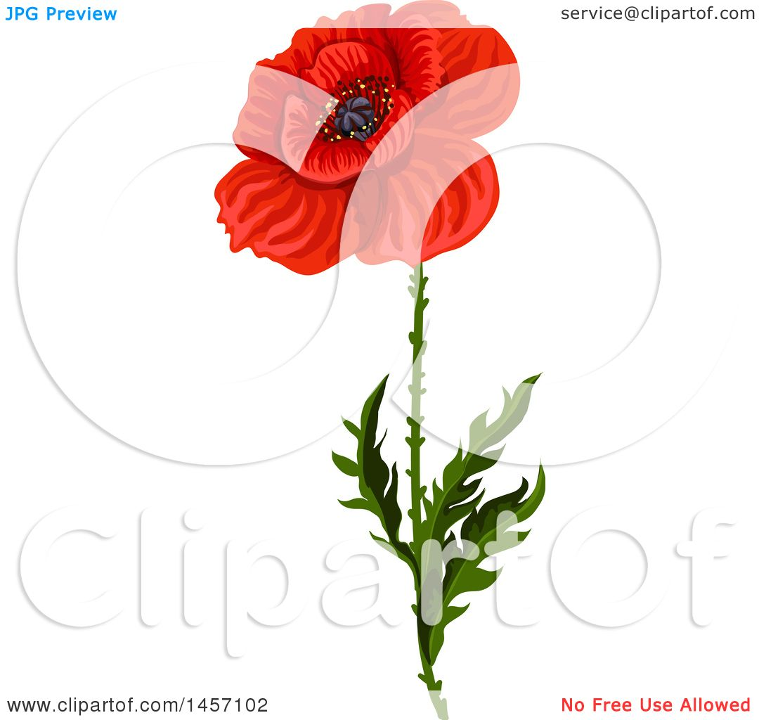 Clipart of a red poppy flower and stem royalty free vector clipart of a red poppy flower and stem royalty free vector illustration by vector tradition sm mightylinksfo Images