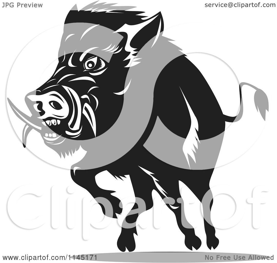 Clipart of a Retro Black and White Charging Wild Boar Pig - Royalty ...