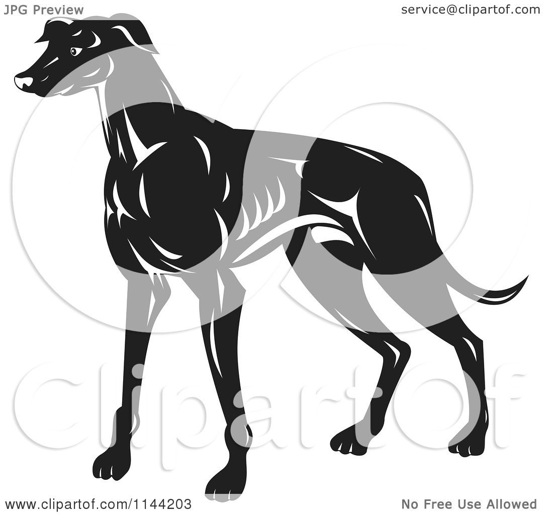 Clipart of a retro black and white greyhound dog royalty - Clipart illustration ...