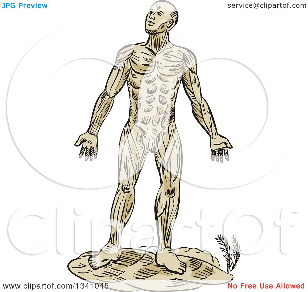 Clipart Of A Retro Sketched Or Engraved Anatomical Man Of Muscle