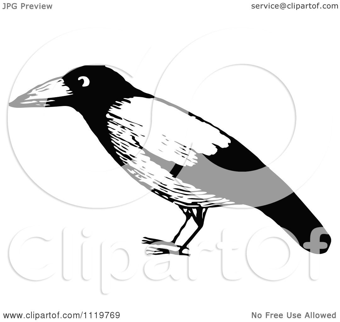 Clipart Of A Retro Vintage Black And White Black Bird - Royalty ...