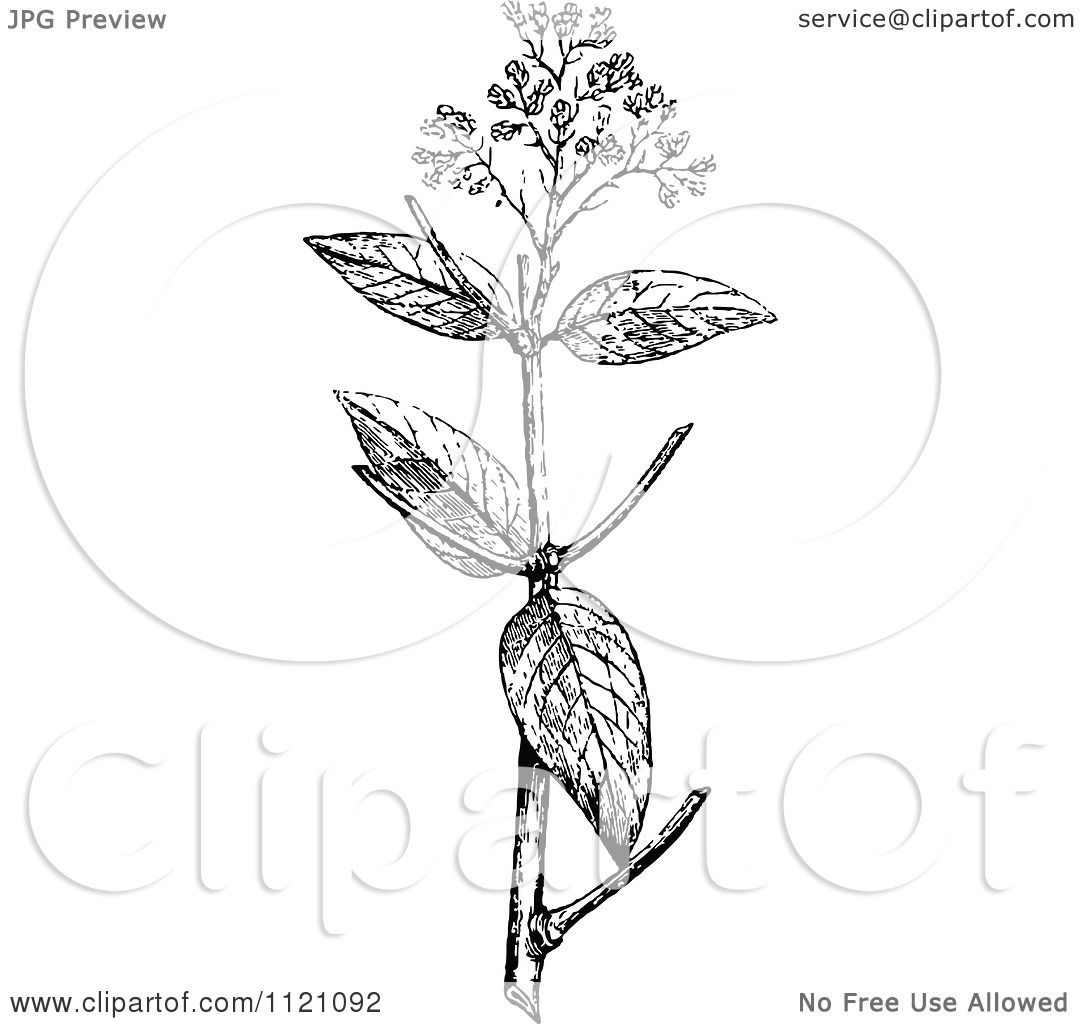 clipart of a retro vintage black and white botanical plant
