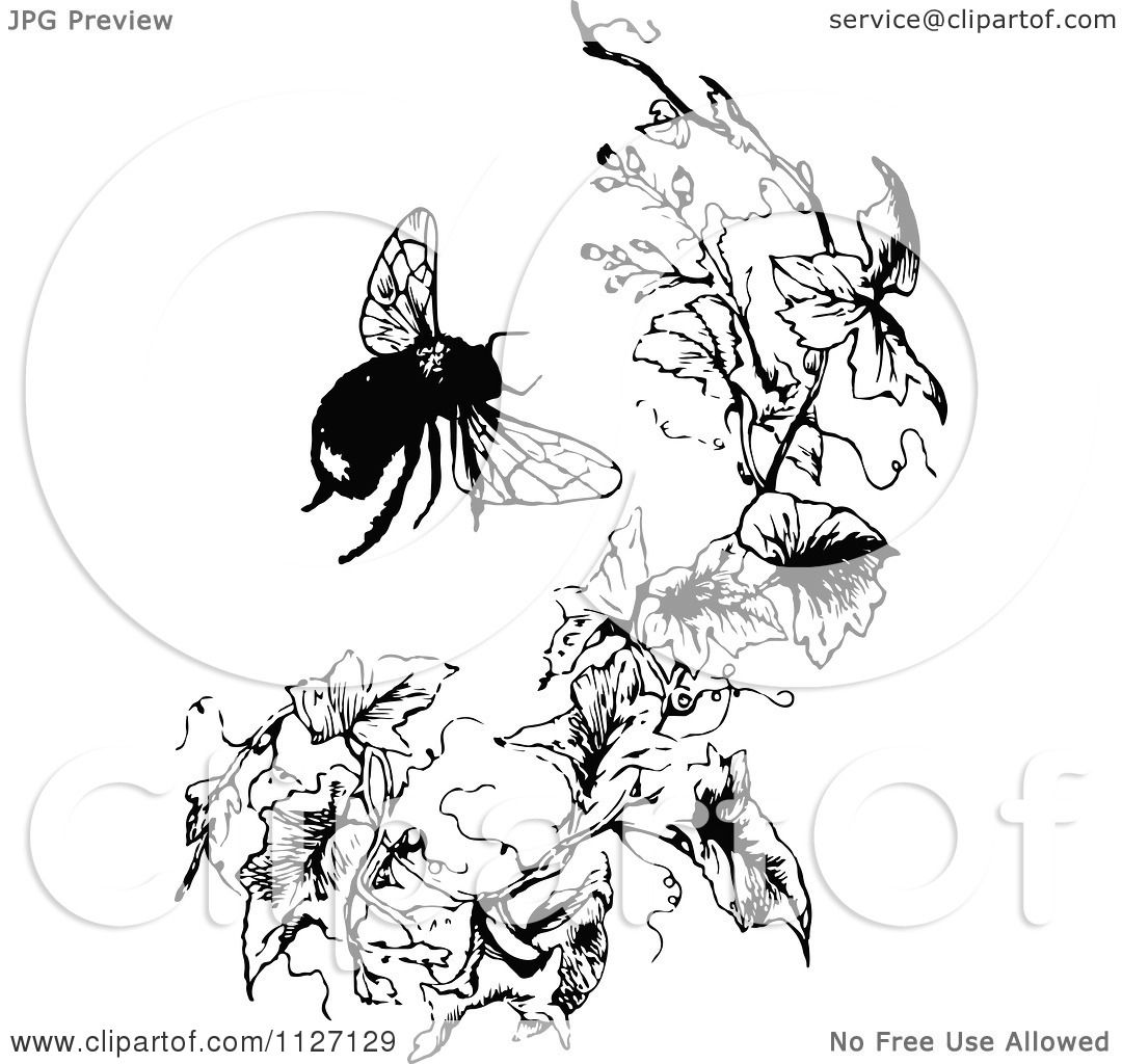 Clipart Of A Retro Vintage Black And White Bumble Bee And Branch ...