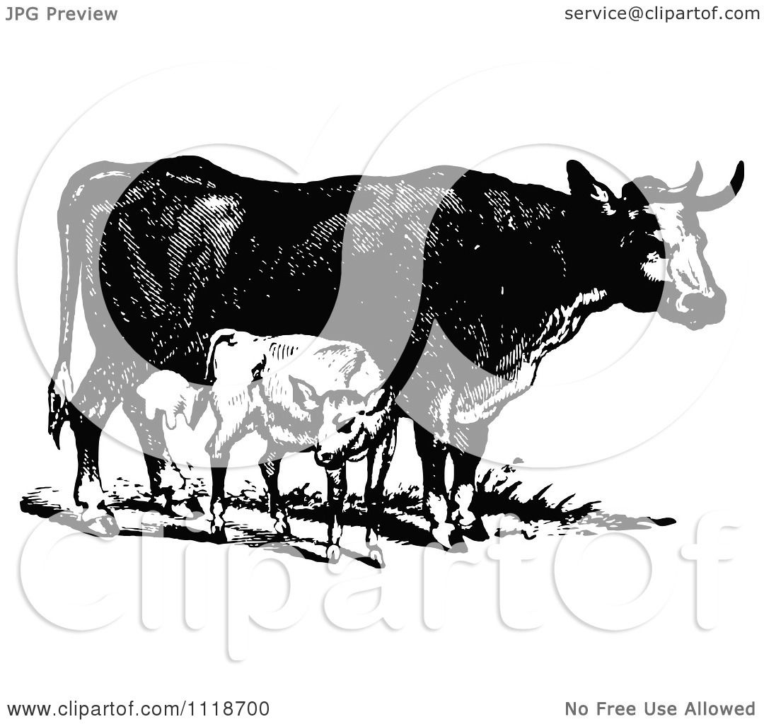 Clipart Of A Retro Vintage Black And White Cow And Calf - Royalty ... for Cow And Calf Clipart  588gtk