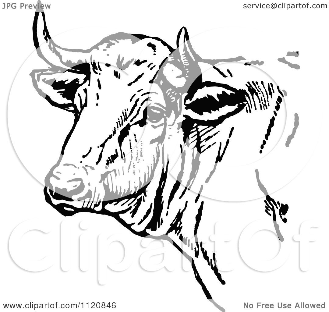 Clipart Of A Retro Vintage Black And White Cow Head ...