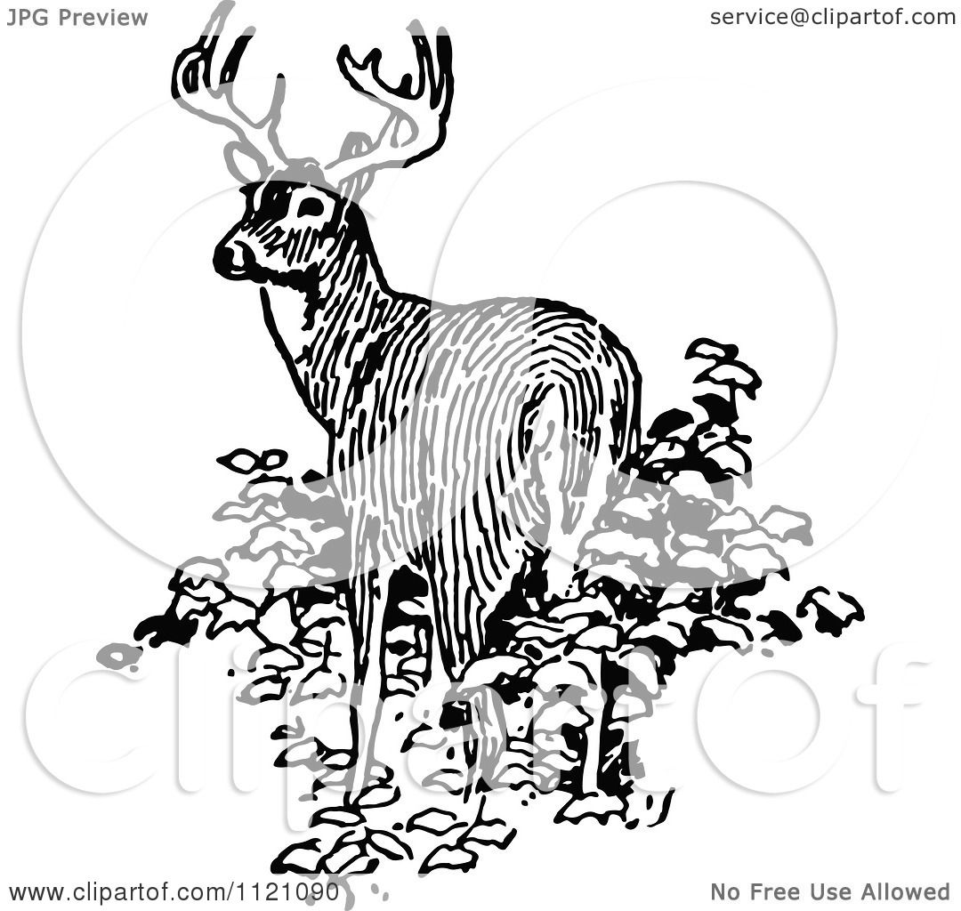 Classic Retro Illustration: Clipart Of A Retro Vintage Black And White Deer In Bushes