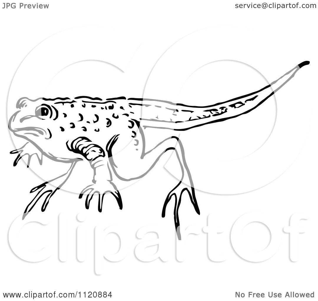 Frog With Tail Clipart