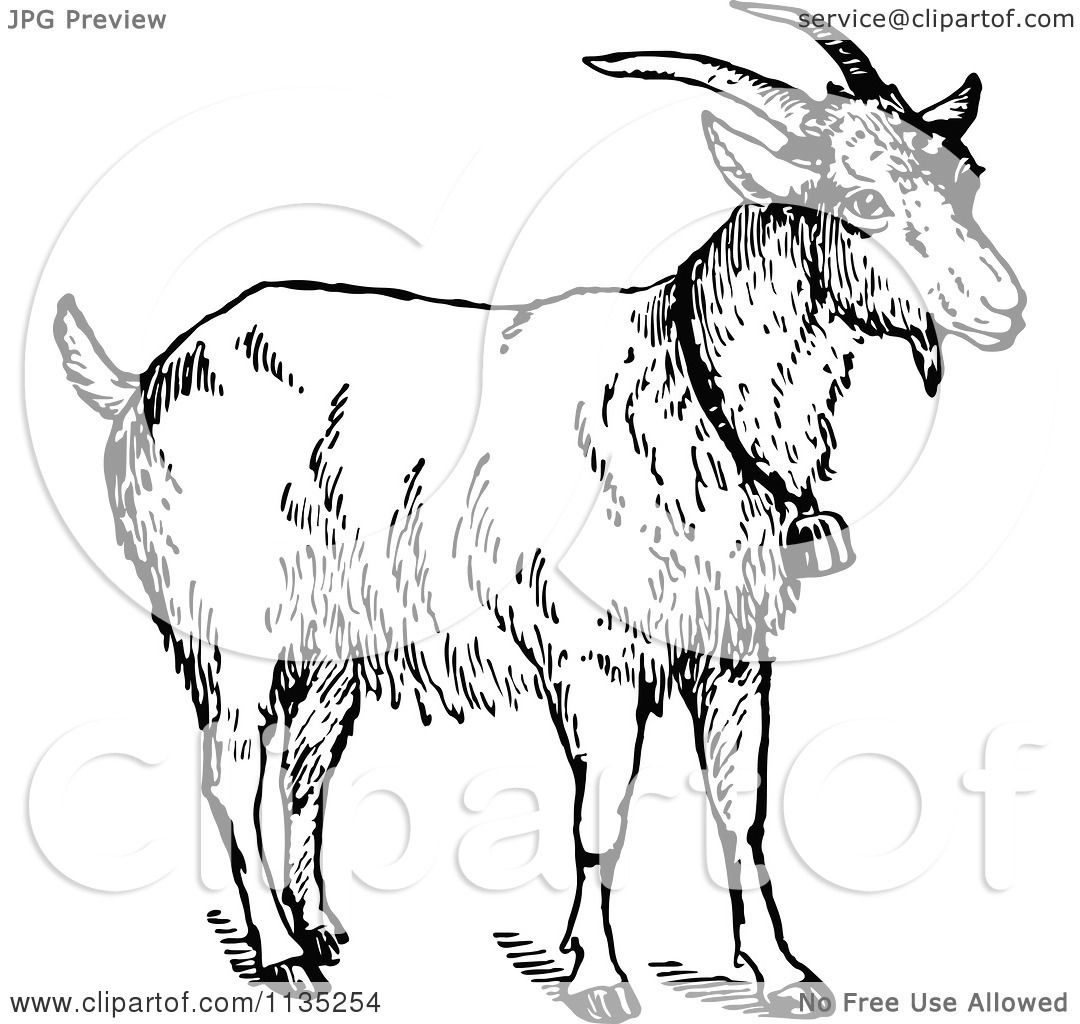 Clipart of a retro vintage black and white goat wearing a - Clipart illustration ...