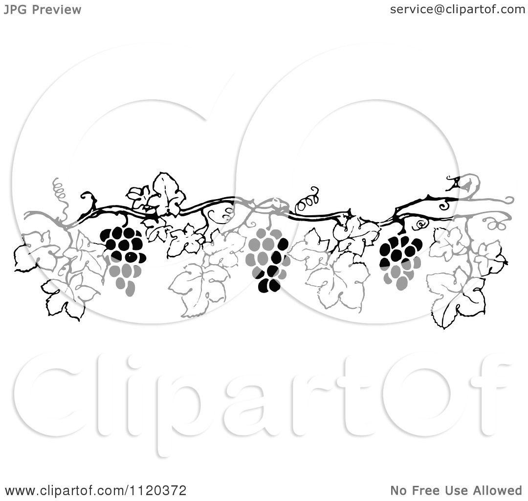 Clipart Of A Retro Vintage Black And White Grape Vine ...