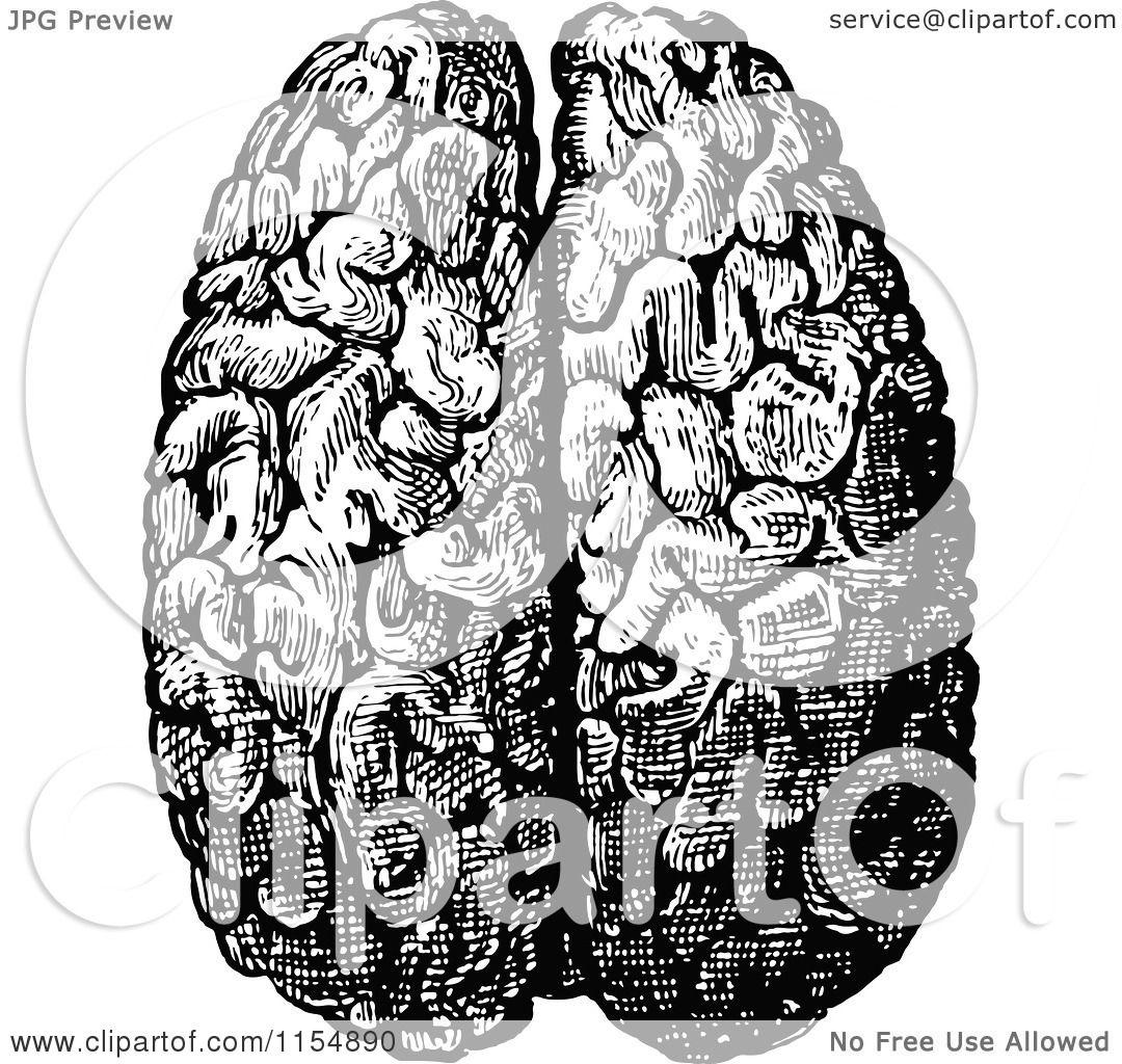 Human Brain Black And White And White Human Brain