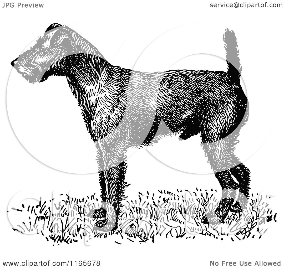 irish terrier coloring pages - photo#43