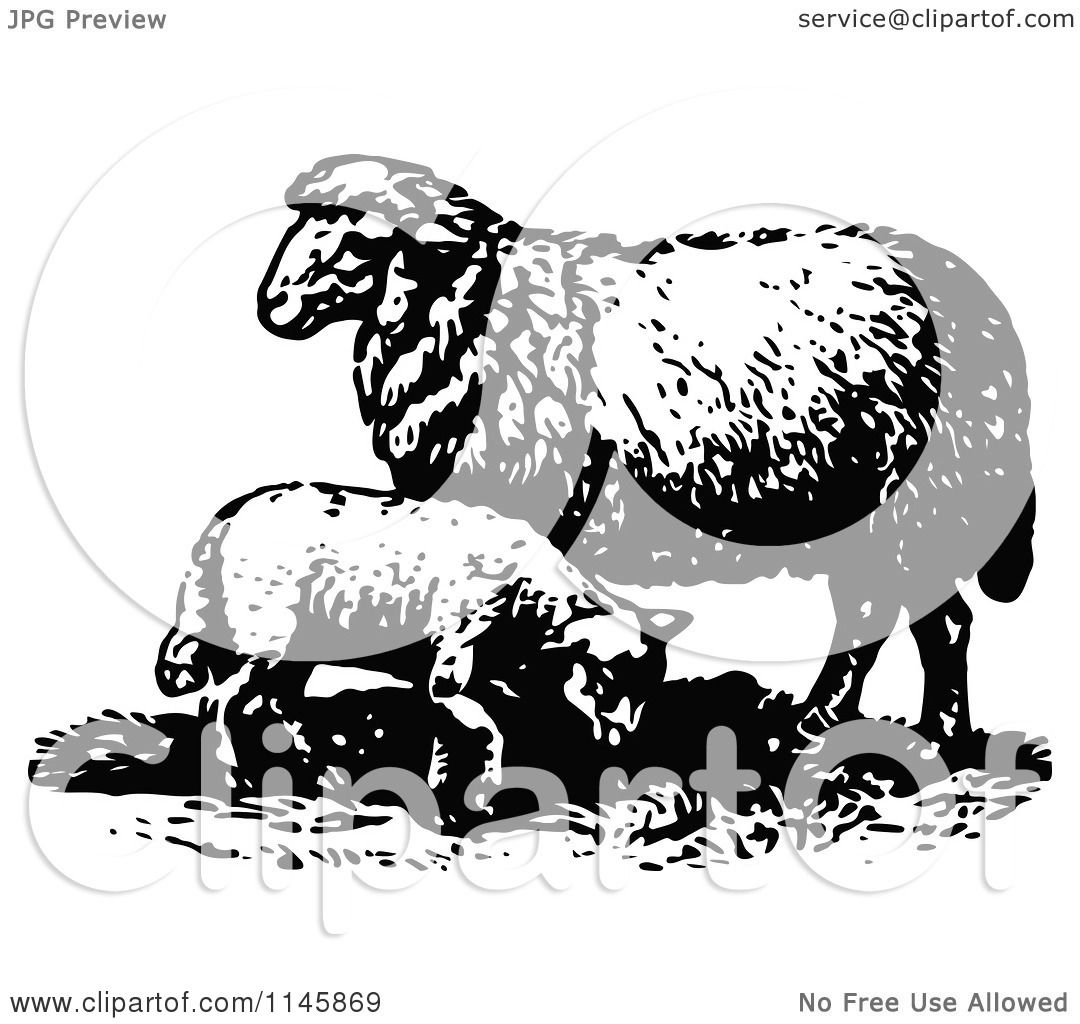 Black and White Lamb and Sheep - Royalty Free Vector Illustration by ...