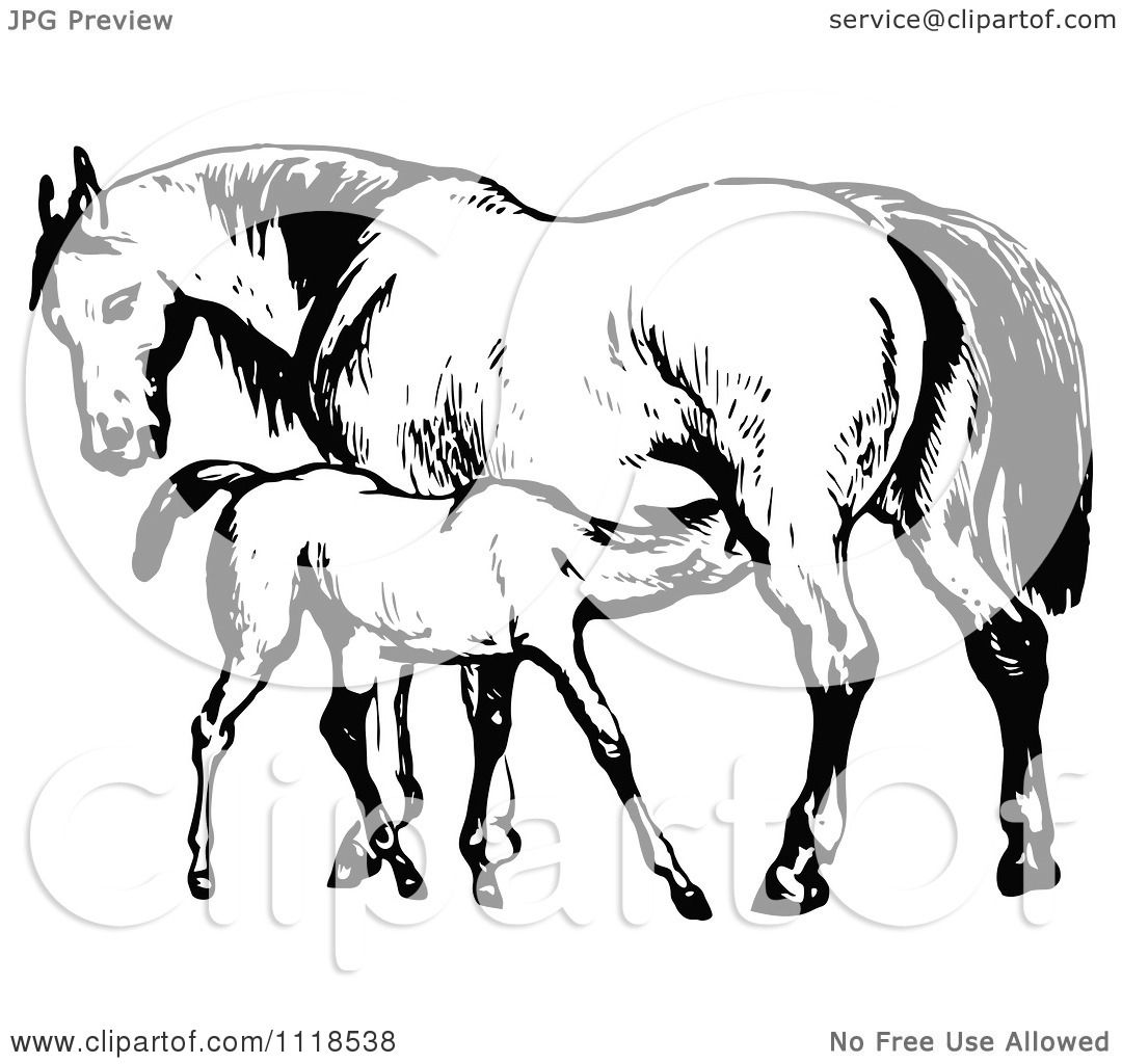 Clipart of a retro vintage black and white mare horse and for Clipart mare