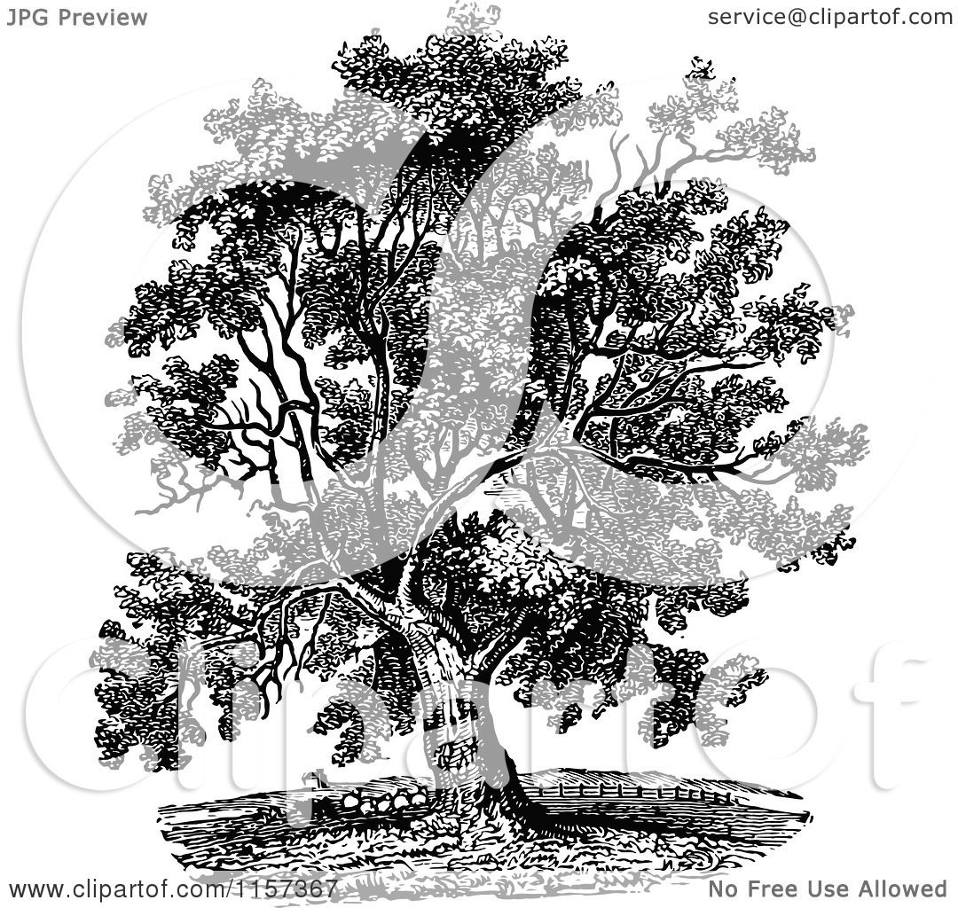 Clipart of a retro vintage black and white mature black walnut clipart of a retro vintage black and white mature black walnut tree royalty free vector illustration by prawny vintage altavistaventures Image collections