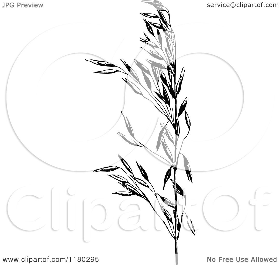 clipart of a retro vintage black and white oat plant