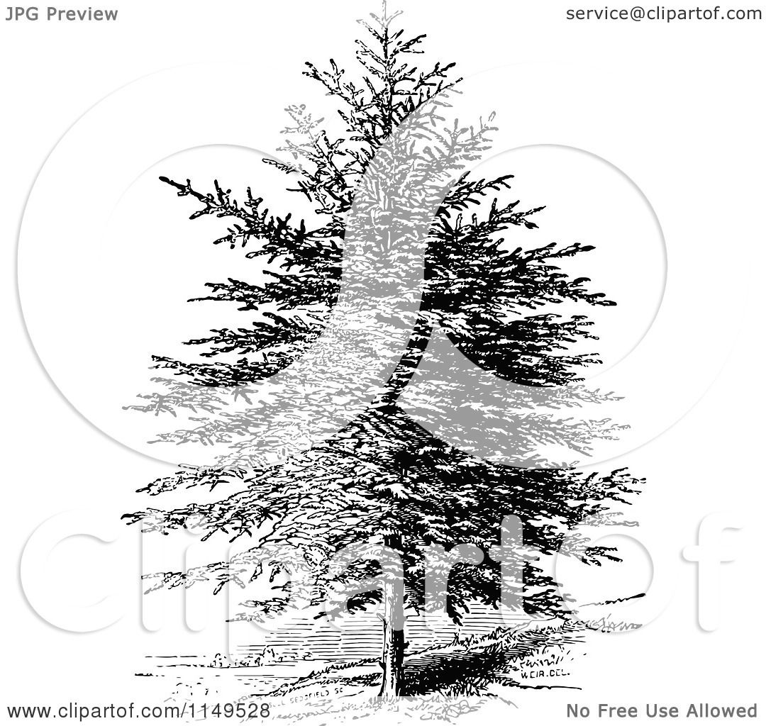 Clipart Of A Retro Vintage Black And White Pine Tree Royalty Free Vector Illustration By Prawny