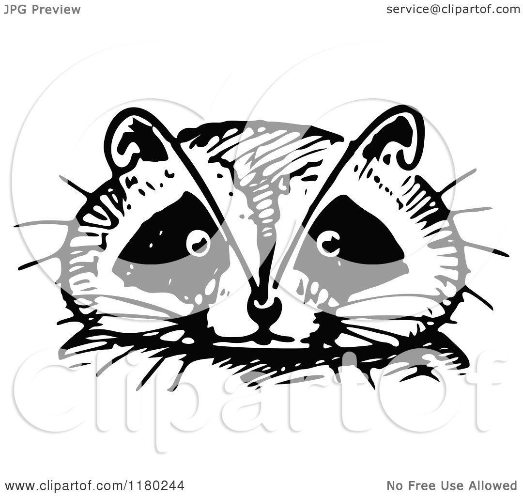 Clipart of a Retro Vintage Black and White Raccoon Face ... Raccoon Face Illustration