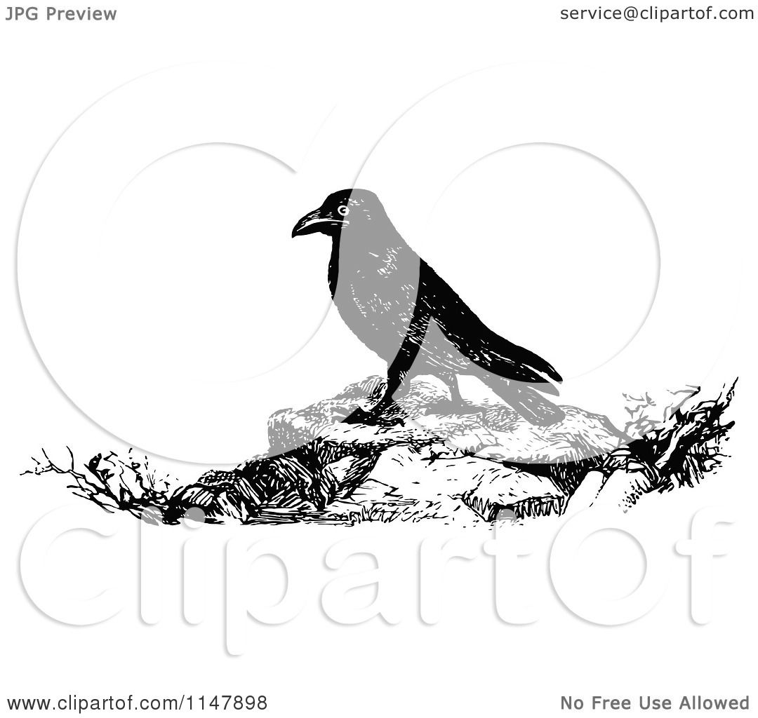 Classic Retro Illustration: Clipart Of A Retro Vintage Black And White Raven