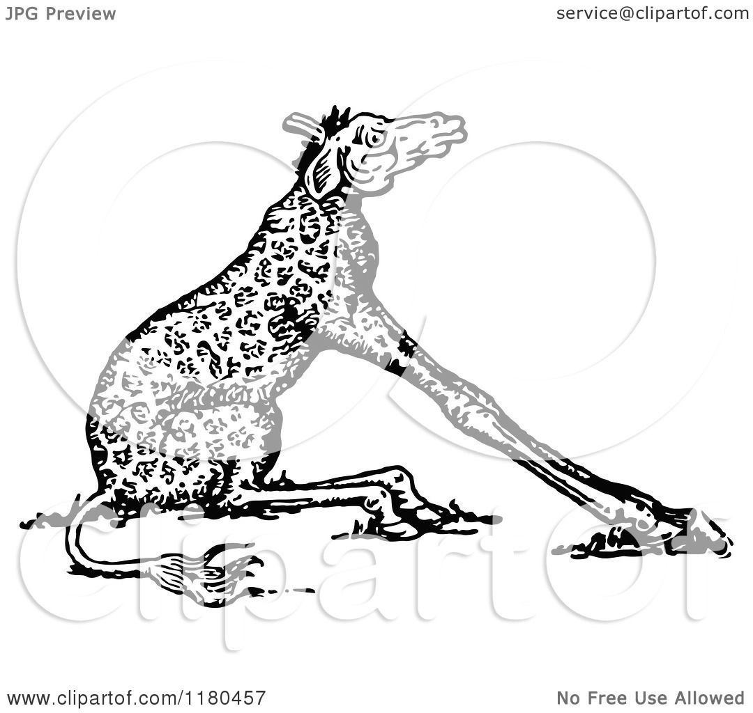 Giraffe With Short Neck Drawing White Short Neck Giraffe
