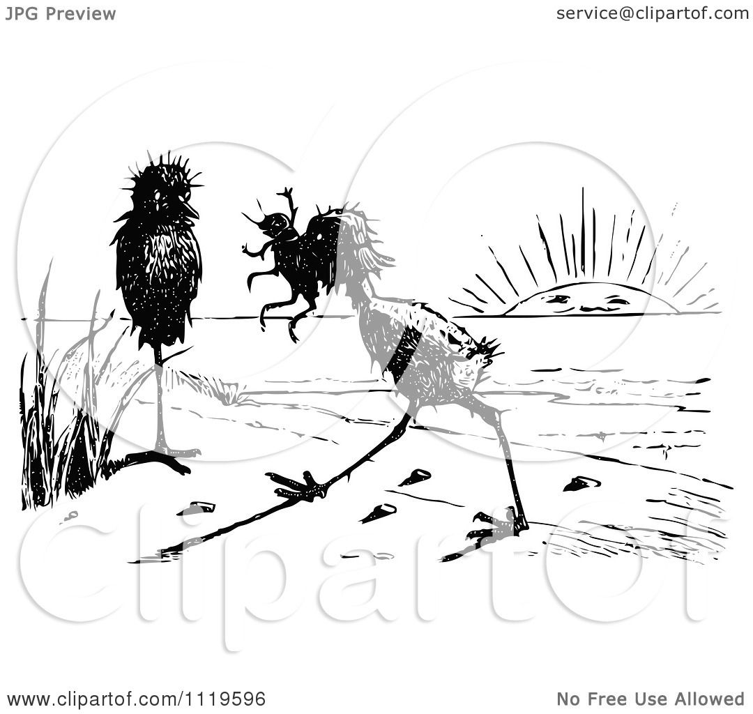 Clipart of a retro vintage black and white ugly birds on a beach 2 royalty free vector illustration by prawny vintage